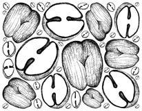 Fondo disegnato a mano di doppi frutti della noce di cocco illustrazione di stock