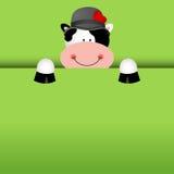 Fondo divertente della mucca che dà una occhiata fuori Fotografia Stock