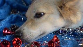 Fondo divertido de la Navidad del perro