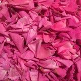 Fondo dolce dell'inceppamento dei petali di rose Fotografie Stock