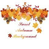Fondo dolce di autunno Fotografia Stock