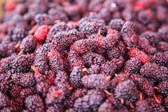 Fondo dolce porpora rosso e scuro maturo della frutta del gelso di sapore Le indennità-malattia dei gelsi includono, per migliora fotografie stock libere da diritti