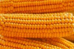 Fondo dorato del cereale del primo piano, agricoltura Immagine Stock
