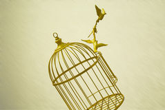 Fondo dorato dell'annata di libertà della gabbia dell'uccello vuoto di arte Fotografia Stock Libera da Diritti