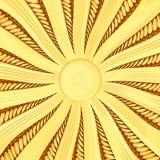 Fondo dorato dello sprazzo di sole con i raggi ed i fasci Immagine Stock