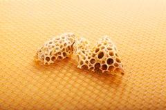 Fondo dorato di apicoltura. immagini stock
