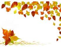 Fondo dorato di autunno Immagini Stock Libere da Diritti