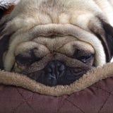 A fondo durmiendo Imagen de archivo libre de regalías
