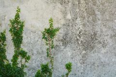 Fondo e piante antichi della parete Fotografia Stock