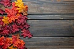 Fondo e struttura di Autumn Thanksgiving con le foglie e le piccole zucche che circondano la struttura immagine stock libera da diritti