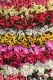 Fondo e struttura differenti del fiore di colori fotografia stock libera da diritti