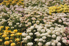 Fondo e struttura differenti del fiore di colori immagini stock
