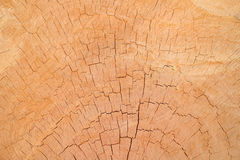 Fondo e textrue di legno Fotografia Stock Libera da Diritti