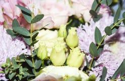 Fondo ed aster rosa floreali astratti l delicata gialla rosa Immagine Stock Libera da Diritti
