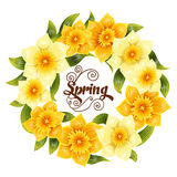 Fondo elegante con il narciso giallo del narciso Fiore della primavera con il gambo e le foglie Modello realistico Immagini Stock Libere da Diritti