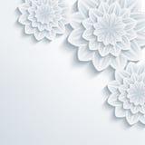 Fondo elegante floral con el crisantemo de la flor 3d Imagenes de archivo