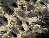 Fondo en base de la textura de madera verde oliva Fotografía de archivo libre de regalías