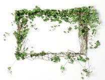 Fondo en blanco floral del marco Fotos de archivo libres de regalías