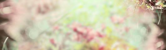 Fondo en colores pastel borroso de la naturaleza, bandera para el sitio web Imagen de archivo