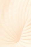 Fondo en colores pastel suave con la estructura de planta Imagenes de archivo