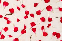 Fondo en el papel viejo de los pétalos de la flor roja imágenes de archivo libres de regalías