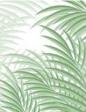 Fondo esotico con le foglie di palma per progettazione nello stile dei pantaloni a vita bassa Immagini Stock