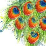 Fondo esotico della piuma del pavone fondo strutturato dell'acquerello dell'illustrazione della piuma del pavone acquerello insol royalty illustrazione gratis