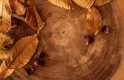 fondo estacional de la caída con las hojas, las castañas y un registro fotos de archivo