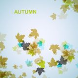 Fondo estacional del otoño Fotos de archivo