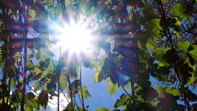 Fondo etéreo brillante con una llamarada brumosa del sol que oscila, concepto feliz de las hojas de la primavera del verano metrajes