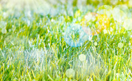 Fondo etéreo de la primavera fotos de archivo