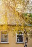 Fondo exterior de la arquitectura de la casa con el abedul verde Fotografía de archivo