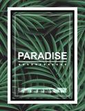 Fondo exótico con las hojas de palma y marco para el inconformista del diseño Fotos de archivo