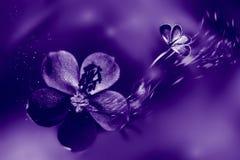 Fondo fasionable naturale ultravioletto Fiori e farfalla nel moto immagini stock