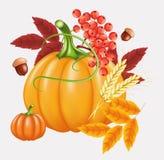 Fondo felice di celebrazione di ringraziamento Zucca, foglie, Rowan Berries, ghiande Immagine Stock Libera da Diritti