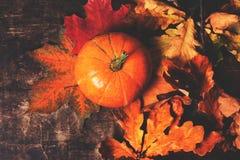 Fondo feliz de la acción de gracias con las calabazas y las hojas de otoño Imagen de archivo