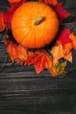 Fondo feliz de la acción de gracias con las calabazas y las hojas de otoño Imagenes de archivo