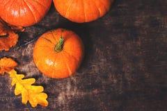 Fondo feliz de la acción de gracias con los wi de las calabazas y de las hojas de otoño Imagenes de archivo