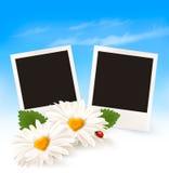 Fondo feliz del día de tarjeta del día de San Valentín Dos margaritas y fotos Foto de archivo libre de regalías