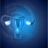 Fondo femenino del sistema reproductivo Fotos de archivo libres de regalías
