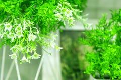 Fondo festivo de la primavera floral en colores verdes con las pequeñas flores blancas Plantas ornamentales artificiales para la  fotografía de archivo