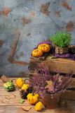 Fondo festivo decorativo de la acción de gracias del otoño de la caída con la calabaza anaranjada Imágenes de archivo libres de regalías