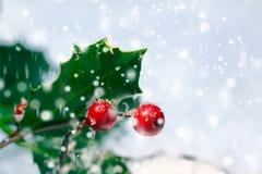 Fondo festivo del acebo de la Navidad Imágenes de archivo libres de regalías