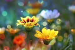 Fondo, fiori Fotografia Stock Libera da Diritti