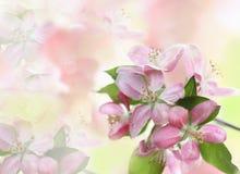 Fondo floral Imagenes de archivo