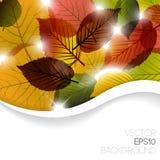 Fondo floral abstracto del otoño Foto de archivo