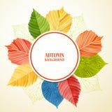 Fondo floral abstracto del otoño con el lugar para su texto Fotografía de archivo