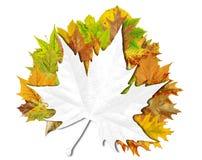 Fondo floral abstracto del otoño con el lugar para su texto Foto de archivo libre de regalías