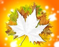 Fondo floral abstracto del otoño con el lugar para su texto Fotos de archivo libres de regalías
