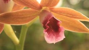 Fondo floral abstracto en estilo de la vendimia almacen de video